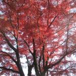 慈光寺境内の紅葉1