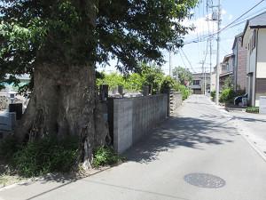 東町会館前のむくの木