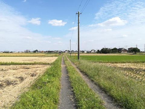 道の写真2